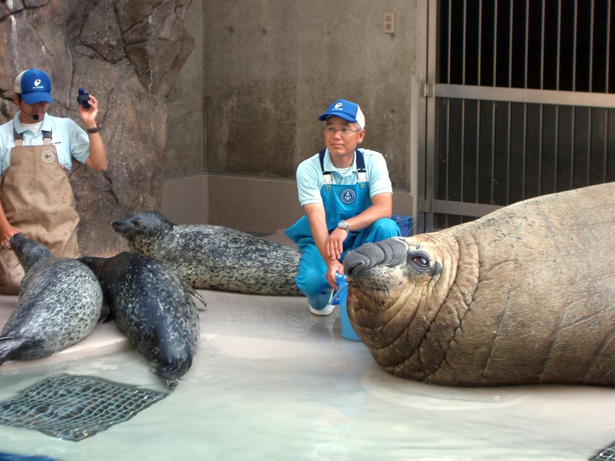 [ Harbor Seal & Southern Elephant Seal ] Size Comparison ...